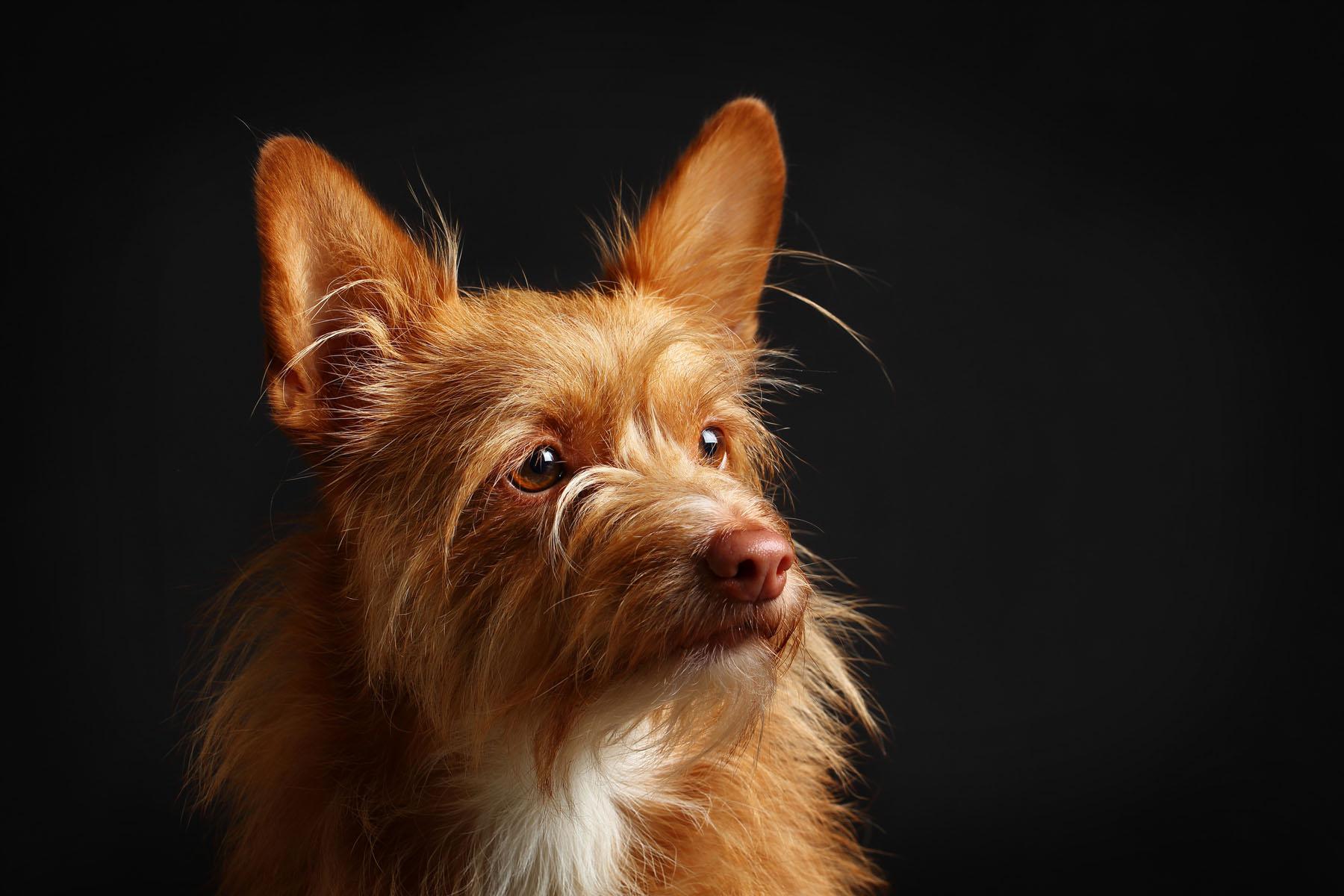 fotografo de mascotas barcelona